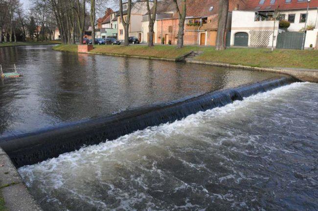 Lachse zurück in Brandenburg