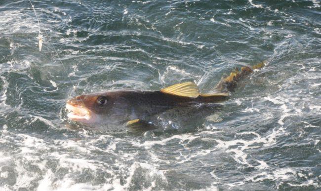 Petition: Kein Verbot der Freizeitfischerei in der AWZ